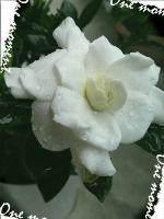 rblog-20130621153356-00.png