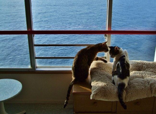 猫 ねこ リンパ腫 消化器型 ブログ