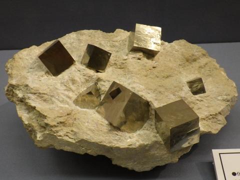 大阪市立自然史博物館2017年4月下旬7 黄鉄鉱(Pyrite) スペイン
