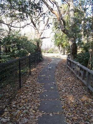 20130103 散歩道
