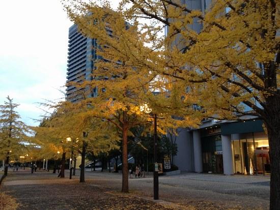 1銀杏の木と3550.jpg