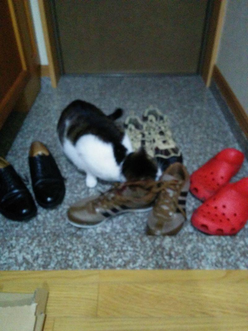 靴フェチな猫1