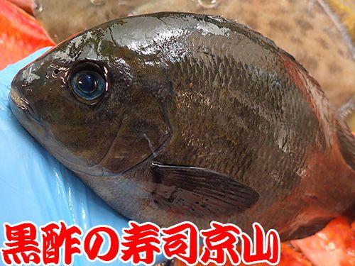 寿司 出前 新宿区 神楽坂