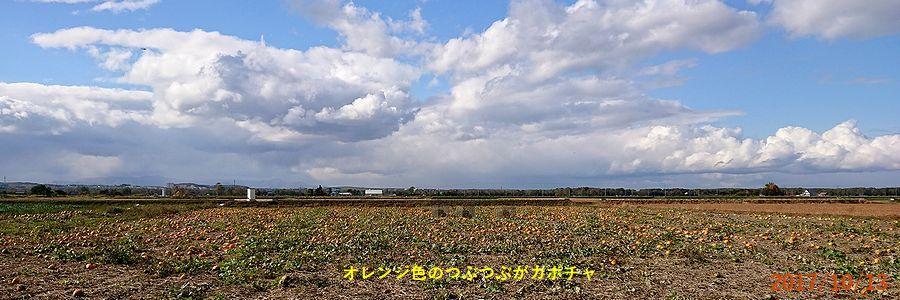 10/13一面のカボチャ畑.jpg