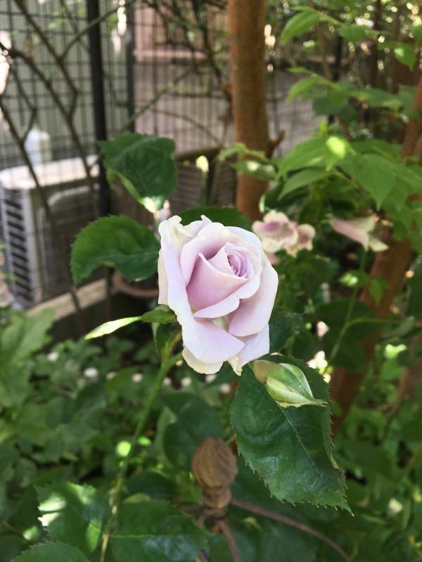 rblog-20170518133330-03.jpg