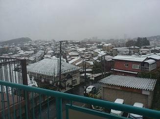まさかの雪.JPG