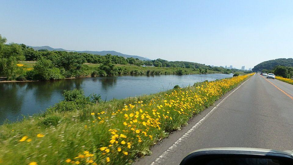 岡山・旭川沿いのイエローロード   楽天版じぶん更新日記 - 楽天ブログ