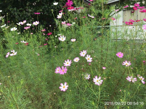 rblog-20180920192042-03.jpg