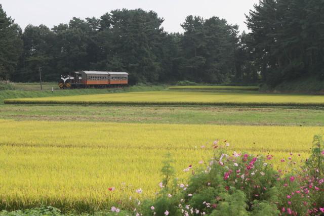 津軽鉄道  実りの秋と 旧型客車