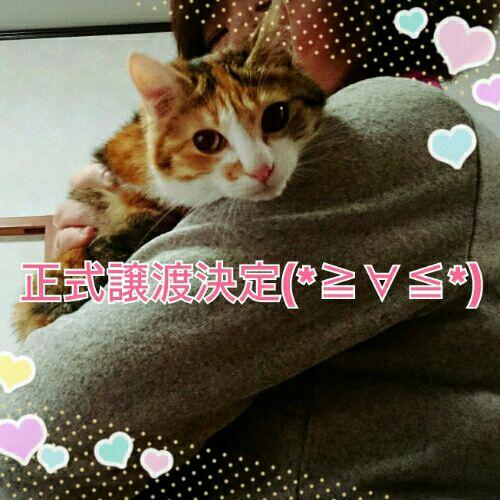 rblog-20160306221654-00.jpg