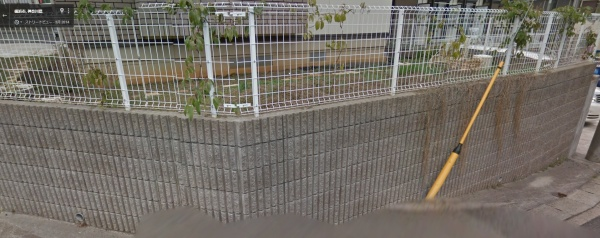 2014年3月の画像 フェンスのムベが小さい
