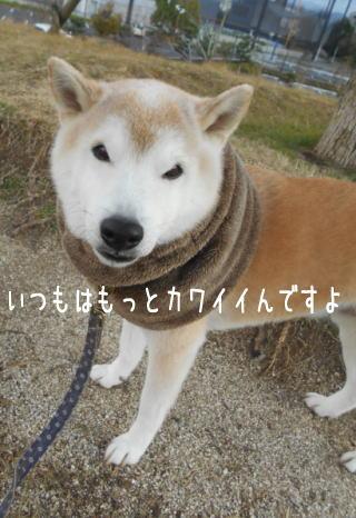 0109夕2.jpg