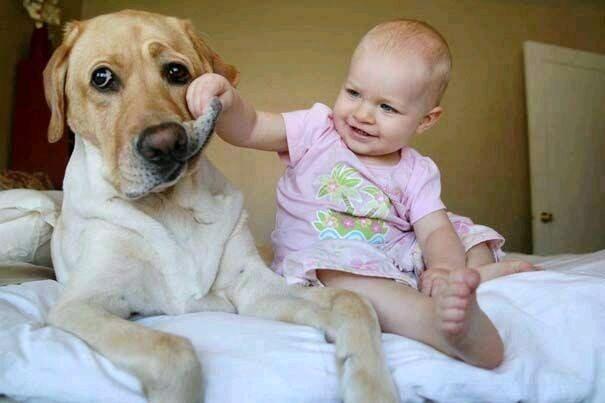犬の皮をつまむ赤ちゃん