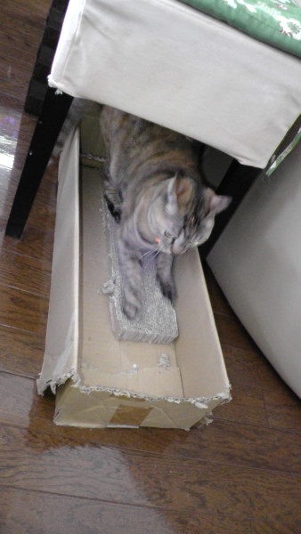 段ボール箱を猫の爪とぎケースにしていたとき