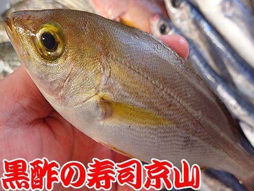 江戸川区南小岩まで新鮮美味しいお寿司をお届けします