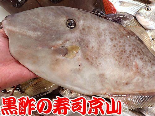寿司 出前 江東区 深川
