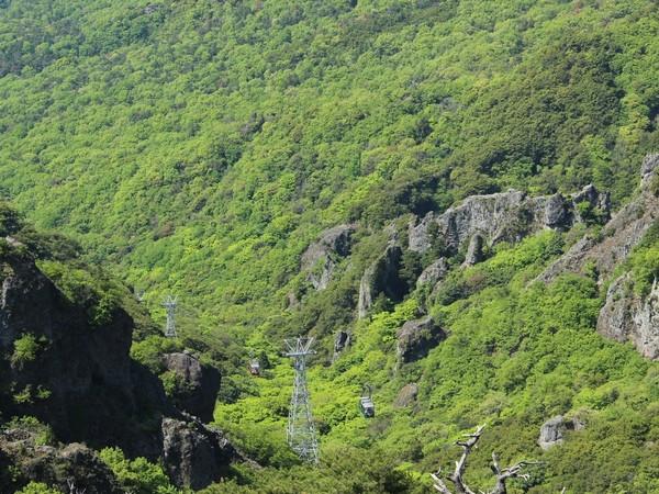 新緑の寒霞渓