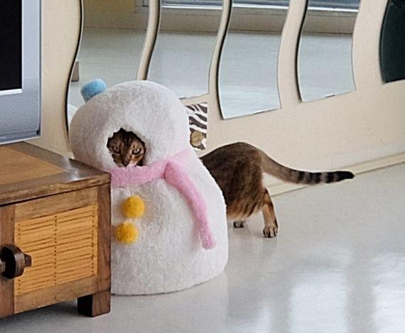 ねこ 冬用ベッド ケンタウロス cat Centaur