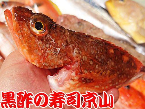 寿司の種類 宅配寿司 ウッカリカサゴ