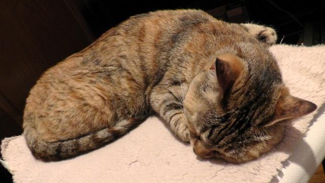 眠る猫 ねこ