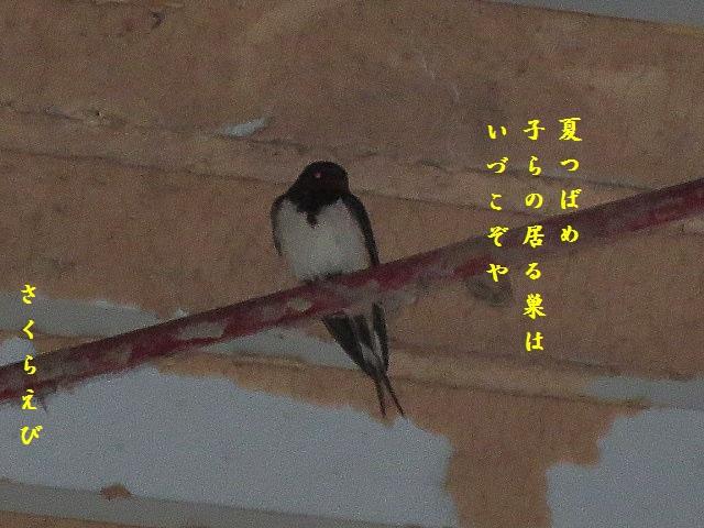 IMG_2411blog45.jpg
