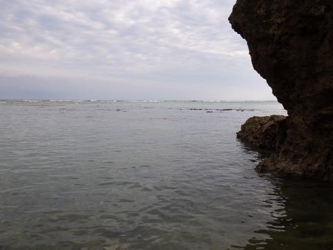 沖縄磯採集2017年5月下旬60