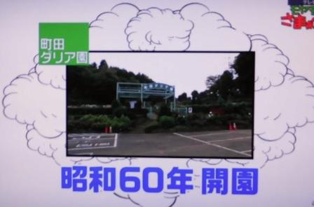 町田ダリア園.jpg