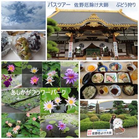 秋のバスツアー 足利フラワーパーク1-001.jpg