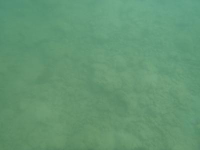 沖縄磯採集2013年7月下旬27 シュノーケリング