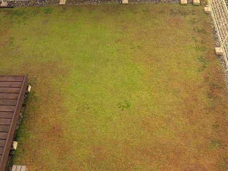 クラピアの11月の定点観測画像3