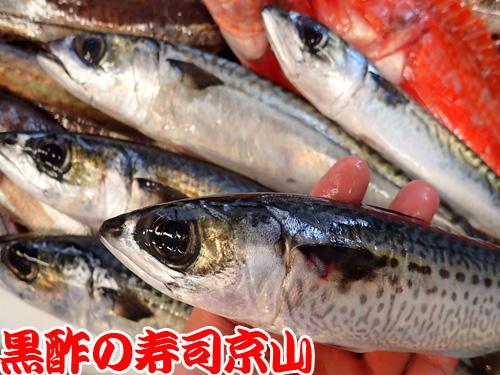 未利用魚 寿司 渋谷区松濤.jpg