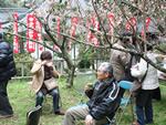 下関市・梅祭り.jpg