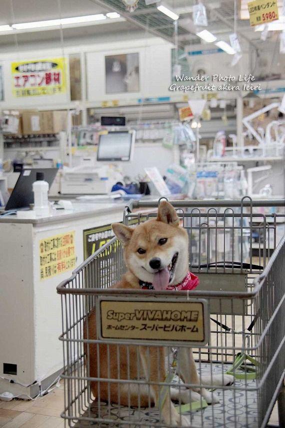 源氏物語1帖から20帖   Dog Phot...