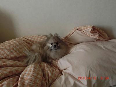 20150412ルビーin BED