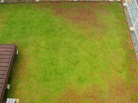 クラピアの10月の定点観測画像2