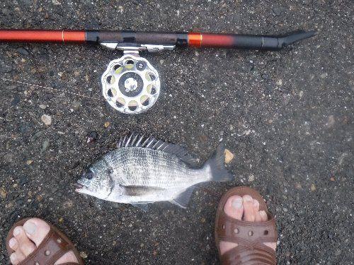 木曜日のヘチ釣り・・・チンコで...
