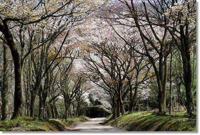 樹木公園-43 大好きな眺め 16.4.9