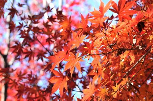 hondoji2013_09.JPG