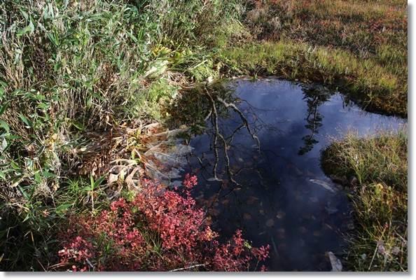 栂池自然園-52 池塘に映る 15.10.2