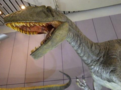 メガ恐竜展2017巨大化の謎にせまる5 カルカロドントサウルスの生体復元模型
