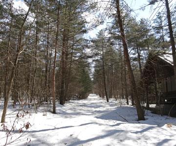 癒しの森の3月4日