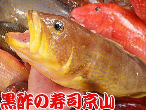 寿司 出前 新宿区 新小川町