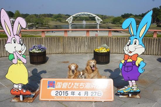 2015-0516-22 (2).jpg