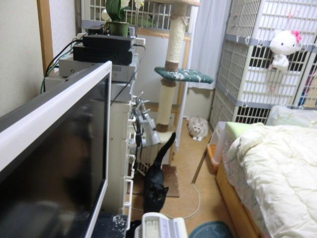 無題-24bitカラー-08.jpg
