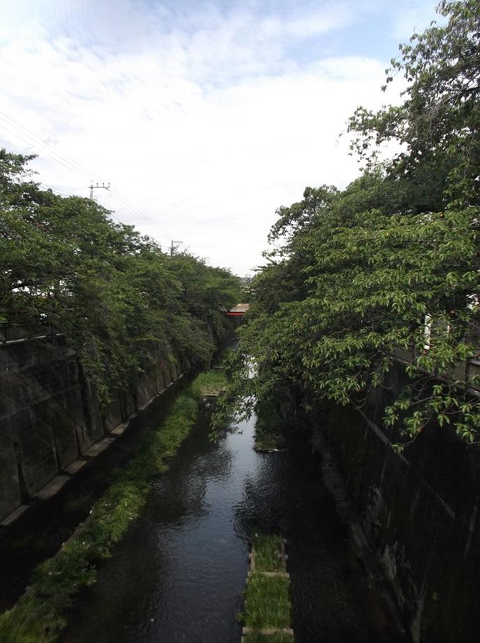 石神井川061503.jpg
