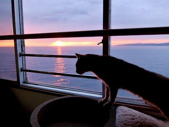 夕日 海 梅雨 猫 田舎暮らし