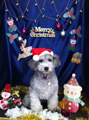 うめクリスマス1.jpg