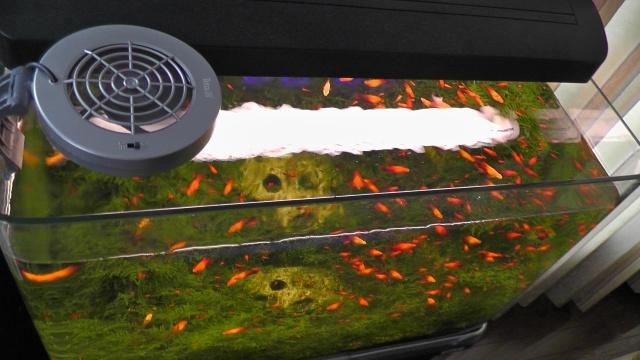 熱帯魚水槽 空冷ファン フチなし水槽