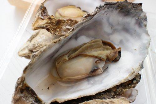 オータムフェストで牡蠣