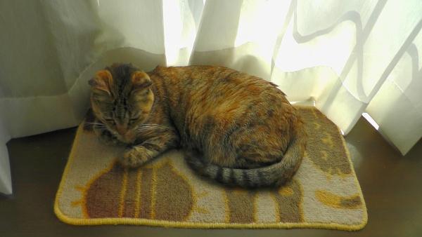 出窓のカウンタに置いたマットの上で寝るネコ